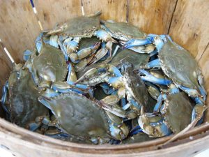 Blue Crab in Plano, TX